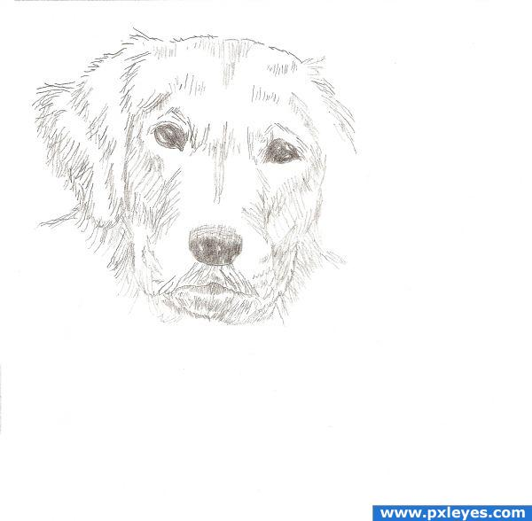 How To Draw A Dog Face...