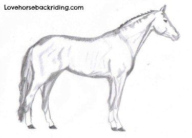 How To Draw A Horse Step By Step For Beginners